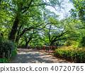 공원 벤치 이노 카 시라 공원 40720765