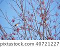 작은 새, 조류, 새 40721227