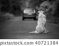 Abandoned dog on the road 40721384
