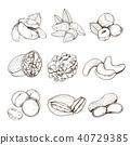 healthy nut vector 40729385