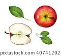 Vector realistic apple half, leaves set top view 40741202