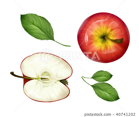 Vector realistic apple half, leaves set top view 40741202
