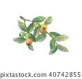 구아바 잎과 열매 40742855
