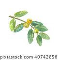 구아바 잎과 열매 40742856