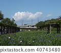 鳶尾 花朵 花 40743480