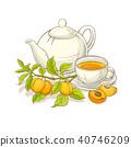 apricot, vector, tea 40746209