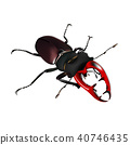 stag beetle, brown bug on a white background 40746435