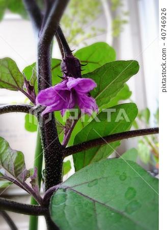 Normal flower 40746926