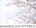 벚꽃, 봄, 꽃 40748812