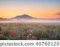 小貝川 만남 공원 양귀비 밭과 쓰쿠바 40760120