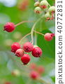 열매, 과실, 과일 40772831