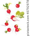 红萝卜矢量图 40792978