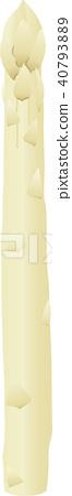 vector, vectors, white asparagus 40793889