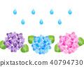 hydrangea, bloom, blossom 40794730