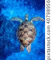 바다거북, 푸른바다거북, 거북이 40798956