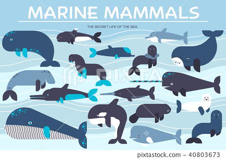 Sea mammals animal collection icons set. Vector 40803673