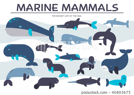 Sea mammals animal collection icons set. Vector 40803675