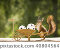 red squirrel standing with a wheelbarrow and ball 40804564