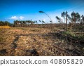 Destroyed forest as an effect of strong storm 40805829