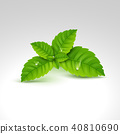 mint, leaf, vector 40810690