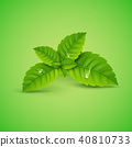 mint, leaf, vector 40810733