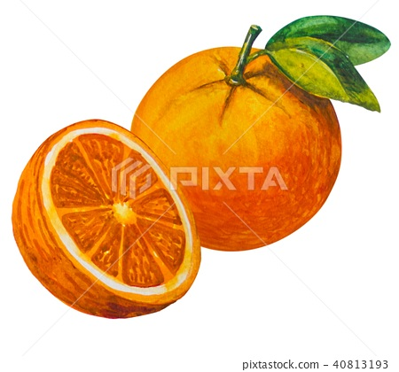 Oange fruit painted with watercolor. 40813193