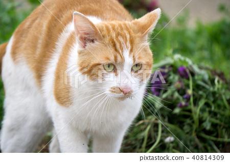 공격 자세 고양이 40814309