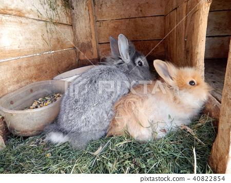 Rabbits in the aviary 40822854