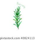 rosemary, watercolor, leaf 40824113