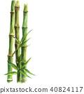 watercolor, bamboo, green 40824117