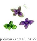basil, watercolor, leaf 40824122