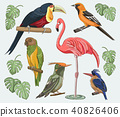 Exotic set birds 40826406