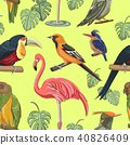 Exotic colorful birds pattern 40826409