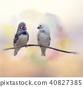 Pair of chestnut-eared finches watercolor 40827385
