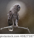 Barred Owlet Perches on a Branch 40827387