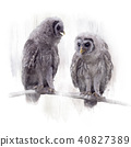 Two Barred Owlets perched on a Branch 40827389