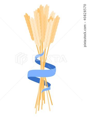 ears of corn 40828570