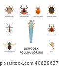 insect, parasite, vector 40829627