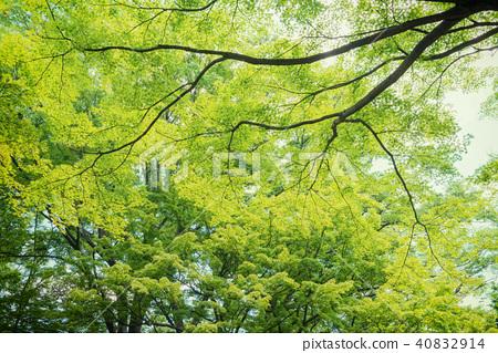 森林公園樹 40832914