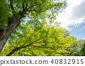 신록의 나무와 푸른 하늘과 구름 40832915