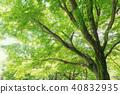 森林公園樹 40832935