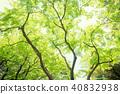 森林公園樹 40832938