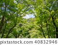 신록의 나무 40832946