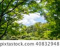 신록의 나무 40832948