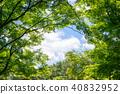 신록의 나무 40832952