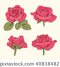 collection, rose, set 40838482