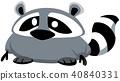 raccoon design 40840331