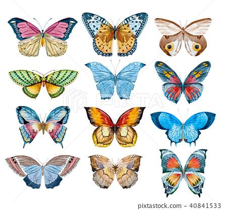 Watercolor butterfly set 40841533