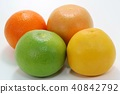 자몽 3 종과 오렌지 1 종 40842792