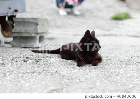 cat 40843006